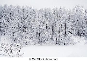 bos, sneeuw