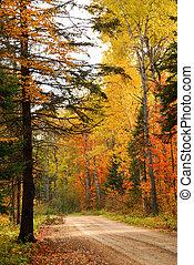 bos, straat