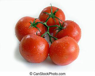 bos van, tomaten