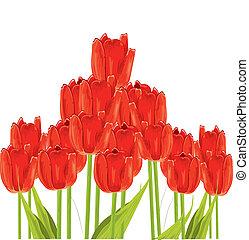 bos van, tulpen, vrijstaand, op wit, achtergrond