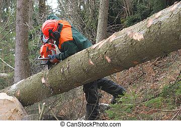 bosbouw, arbeider