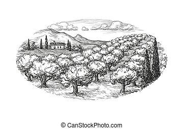 boschetto olivastro, paesaggio