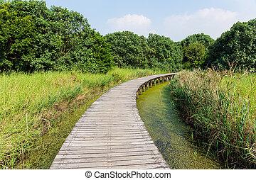 boscoso, ponte, sopra, il, fiume