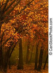 bosje, nevelig, herfst, scène, morgen