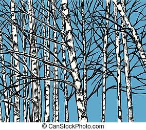 bosje, seizoen, beeld, vector, berk, koude