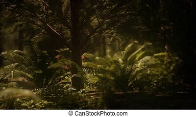 bosje, sequoias, vroeg, mariposa, zonlicht, morgen