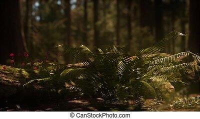 bosje, vroeg, mariposa, zonlicht, sequoias, morgen