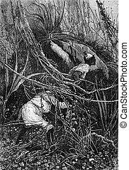 bosjesman, en, heer, john, slipped, onder, de, struiken,...