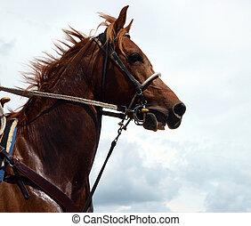 boskapsskötare, kastanje, häst