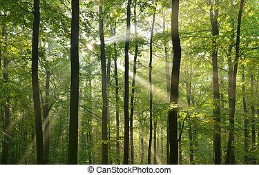 bosque, árboles