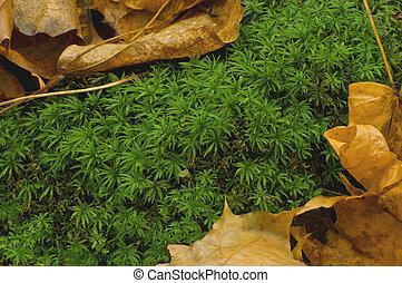bosque, alfombra