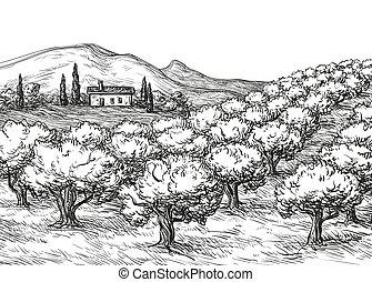 bosque azeitona, paisagem