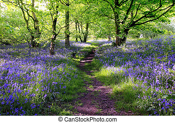 bosque azul, campanas