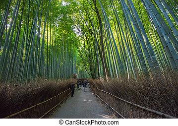 bosque bambu, em, arashiyama, kyoto, japão