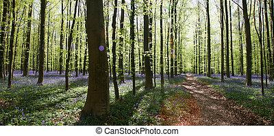 bosque, bluebell