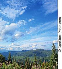 bosque boreal, paisaje