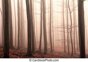 bosque brumoso