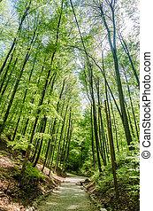 bosque, callejón