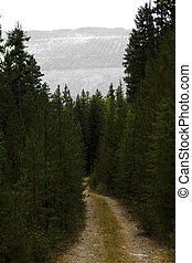 bosque, camino, en, montana