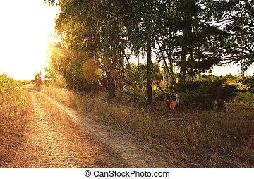 bosque, camino