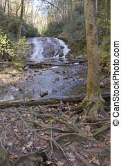 bosque, cascada