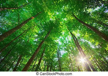 bosque, composición, naturaleza