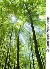 bosque, con, luz del sol