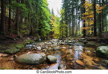 bosque, corriente, en, otoño