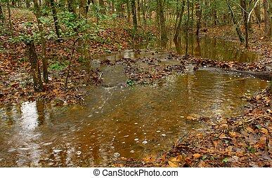 bosque, corriente, otoño