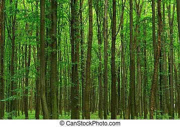 bosque de árbol