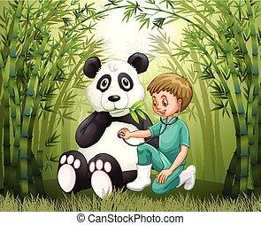 bosque de bambú, doctor, veterinario, panda
