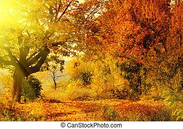 bosque de otoño, con, haz de sol