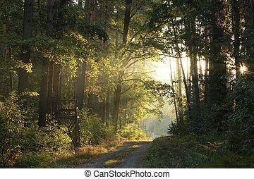 bosque de otoño, en, salida del sol