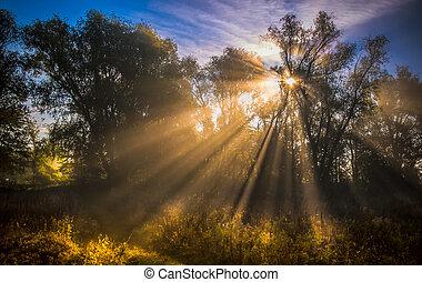 bosque de otoño, paisaje