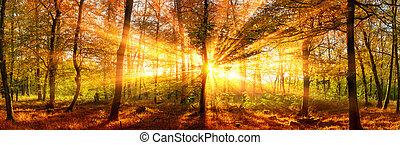 bosque de otoño, panorama, con, vívido, oro, rayos de sol