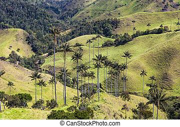 bosque, de, palma, de, cera, la, samaria, san, felix, salamina, caldas, col