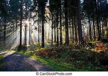 bosque, en, el, mañana