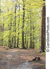 bosque, en, el, primavera