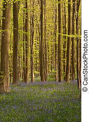 bosque, en, primavera, -, 1