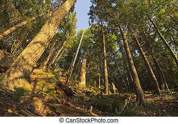 bosque, fisheye