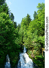 bosque,  germany-12, negro,  triberg, cascadas