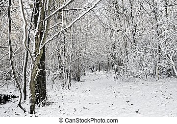 bosque, Inverno, neve