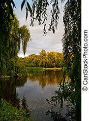 bosque, lago, árboles, escena