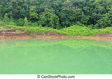 bosque, lago