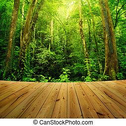 bosque, lluvia