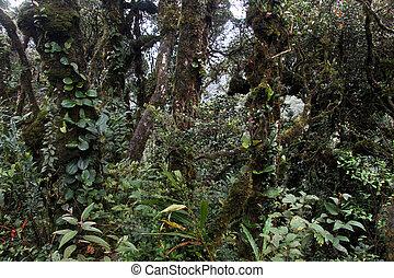 bosque, musgo