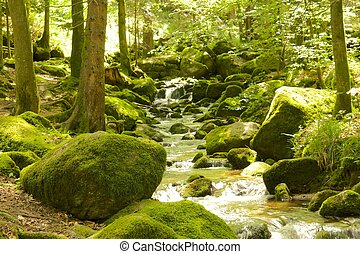 bosque negro, sendero de excursión