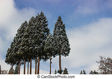bosque, neve, árvores, sierra, coberto, nevada