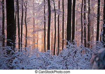 bosque, nevoso