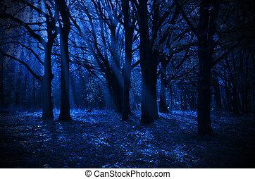 bosque, noche